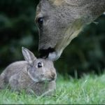 Disney in real life: Bambi and Thumper