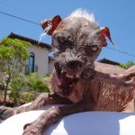 Ugliest dog of the year