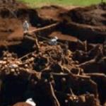 Cu excavatorul printre furnici