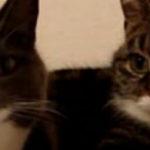 Doua pisici stau la un pahar de vorba
