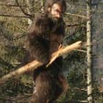 Bigfoot in Muntii Vrancei