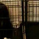 Prison Break (editia canina)