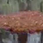 O pluta construita de furnici este…