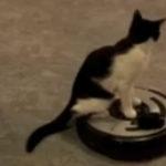 Schumi pisica