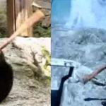 Kung Fu Bear vs. Ninja Bear