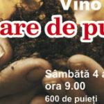 """Vino si tu la """"Plantare de puieti"""" pe strada Crinului"""