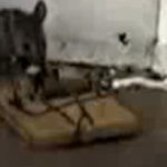 Epic Mouse Trap Fail