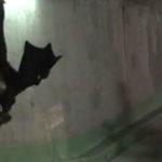 Remi Gaillard – The Bat