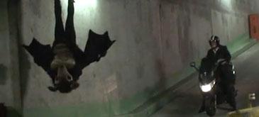 remi-gaillard-the-bat