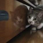 Pisica Ninja (3)