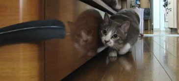pisica-ninja-se-intoarce
