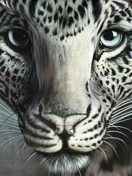 animal-21
