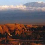 Michael Cassette – Kilimanjaro