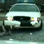 Bulldog vs masina de politie