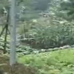 Gradina unui fermier japonez