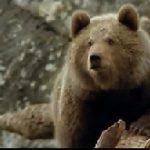 L'Ours (1988) – Ursul