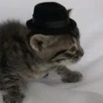 Pisica lu' Ovidiu Sirb