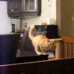O pisica rahitica