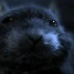 Animatie: One Rat Short