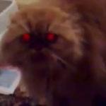 Pisica demonica