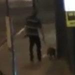Un caine plimba un om…