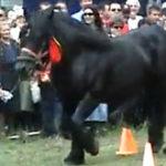 Un cal (cu) defect