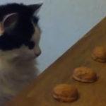 O pisica pasionata de jocurile de noroc