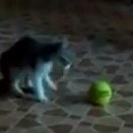 """Pisica vs. """"acel lucru"""""""