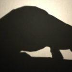 WWF: Save the Cerrado