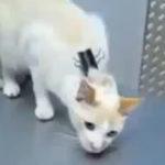 "Cum sa ""dezactivezi"" o pisica"