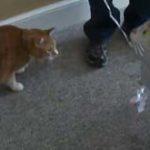 Pisicile sunt foarte geloase….