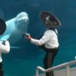 Si balenele sunt melomane