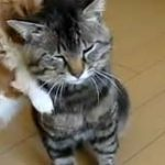 O pisica rabdatoare….