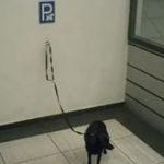 Loc de parcare pentru….catei