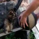 Si pisicile joaca baschet