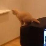 O pisica rahitica (4)