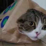 Mie imi plac cutiile (5) – Maru a implinit 4 ani
