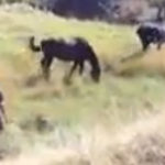 Caii salbatici trebuie lasati in pace