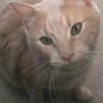 O pisica extrem de politicoasa
