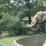 Nu enervati elefantii de la Zoo