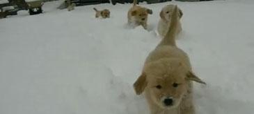 La Brasov ninge neintrerupt
