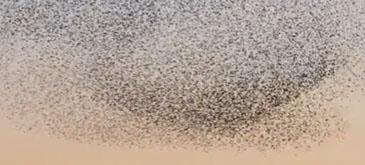 A bird ballet