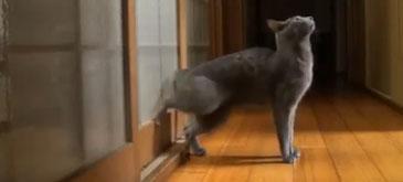 O pisica bine crescuta