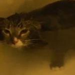 O pisica miauna sub apa