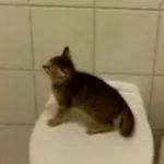 O pisica rahitica (5)