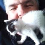 Mi-am luat o pisica