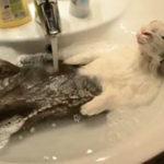 Un iepuras facea o baie cu spuma