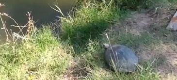 Amazing Turtle Jump
