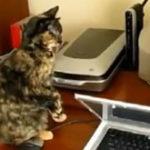 Compilatie: Pisici vs. Imprimante