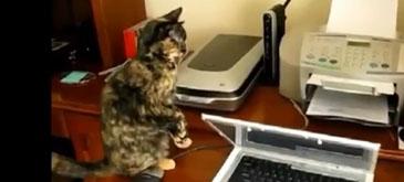 Compilatie Pisici vs Imprimante